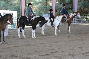 English Show Horses Lined Up by HorseStockPhotos