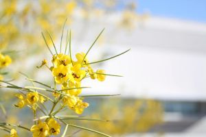 Spring Flowers by sealida