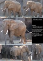 Elephant Stock 2 by Melyssah6-Stock