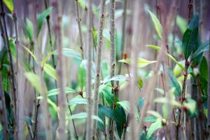 Green in Winter by AndehDulac