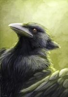 Dark Gryphon by Ruth-Tay