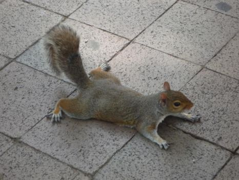 Squirrel 2 by raindroppe