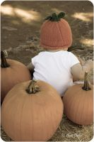 Baby Pumpkins by StephGabler