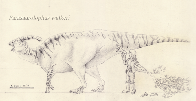 Parasaurolophus walkeri scale drawing by TheWoodParable