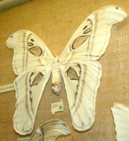 Hogle Zoo 75 - Moth by Falln-Stock