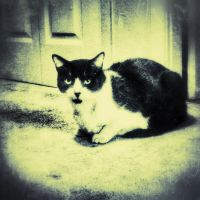 The Upstairs Cat 3 by wdlougee