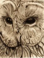 Owl by musicx09