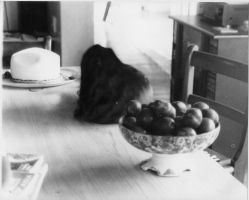 Hat, Cat, And A Bowl Of Fruit by taejo