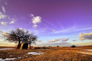 The first hint of spring II by tomsumartin
