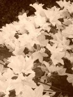 Sepia Stars And Dirt 2012 by AceOfStCanardKLy