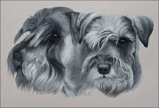 Miniature Schnauzers by chipset