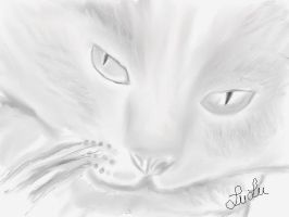 Maxxs. kitty!!! by Sketched-Nightmares