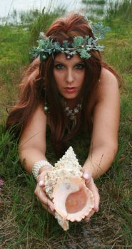Shell 06 by MarjoleinART-Stock