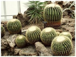 Cactus Patch by noval