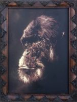Chimp by AmineShow