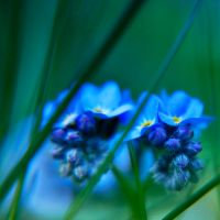 total in blue by PatiMakowska