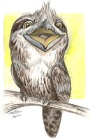 Color Sketch: Tawny Frogmouth by caramitten