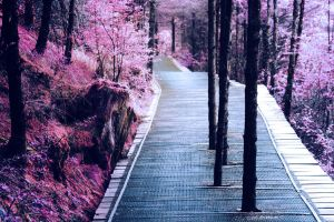 The Path by AMOUSIA