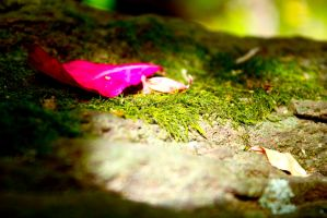 Pink Leaf 2 by RosieHoliday23