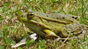 Wild Frog by JourneyToTheLine
