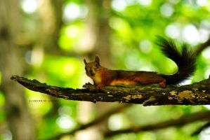 squirrel by rockmylife
