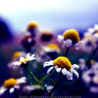 Marguerite 2 by Somebody--else
