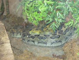 Slither And Hiss by LMonicG1983
