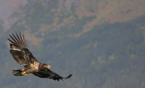 Eagles wings 2 by JWFisher
