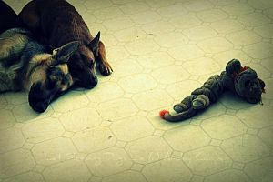 Let Sleeping Dogs Lie by blacklacefigure