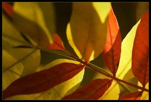 autumn leaves 6 by sergiemag