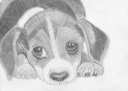 Cute puppy by ArtfullyArty
