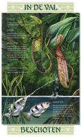 Infopanel archerfish and pitcher plant by LeenZuydgeest