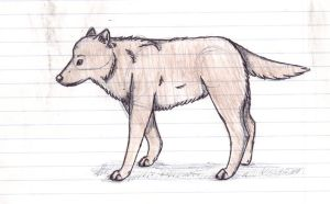 Brown Wolf by groverismypuppy