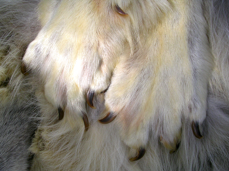 Wolf Paws - Close Up by FossilFeather