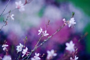 Flowers of the City 13.14 by DorottyaS