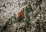 A sign of fall among the rocks by valiunic