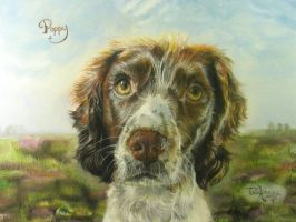 Springer Spaniel by xxx-ellie