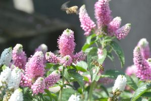 A Haven for Bees, Making A Fly By by Miss-Tbones