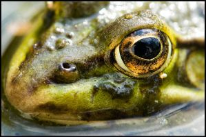 Into the eye of the Frog by dmatsui