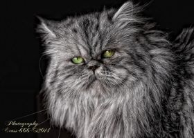 Cat By Eross 666-d4uuwns by eross-666