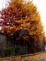 Touch of fall VII by TriciaStucenski