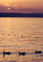 Lake Constance Sundown by cloe-patra