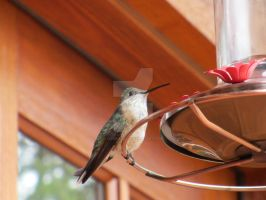 Hummingbird on feeder by MarbleTilly