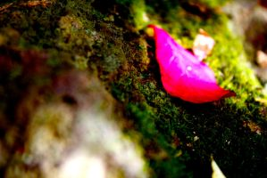 Pink Leaf 1 by RosieHoliday23