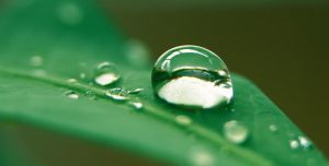 Water Drop on Leaf by bleu3t