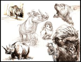 animal sketches by GIO2286