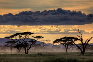 Good morning Tanzania by amnona