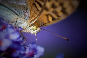 Compound Eye by DREAMCA7CHER