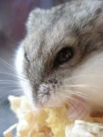 Angry Hamster Loves Food by oceaneyeschaos