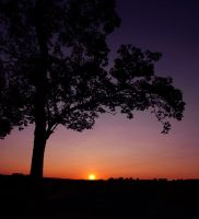 I wish.. by NorwegianAnette